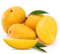Fresh Indian Mango Alphonso / Dashehri / Chaunsa / Kesar FRESH MANGO