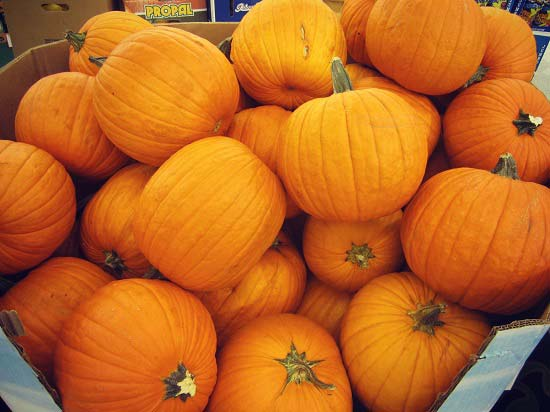 Best Quality Fresh Pumpkins