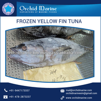 Best Yellowfin Tuna available from Top Factory/Supplier at Low Price
