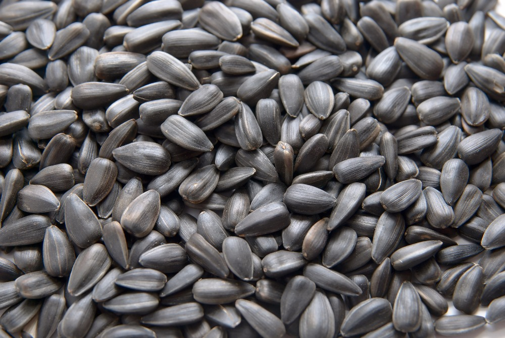 sunflower seeds kernel for confectionery and bakery grade