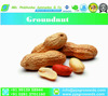 Groundnut for Seed/Bold Groundnut/Java Groundnut