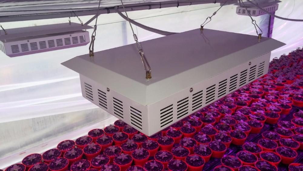 Plafoniere Per Alte Temperature : Finden sie hohe qualität agro led licht hersteller und