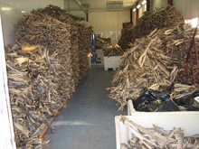 Stockfish - Dried Whole Fish - Icelandic - Cod/ Tusk/ Skate