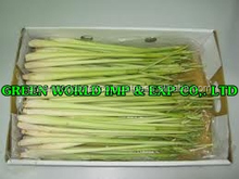 WHOLE/GRATED LEMON GRASS WITH BEST QUALITY FROM VIETNAM