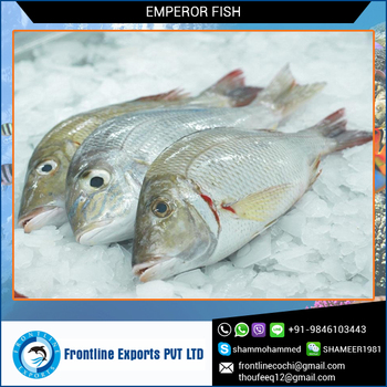High quality frozen emperor fish best price buy frozen for Best way to freeze fish