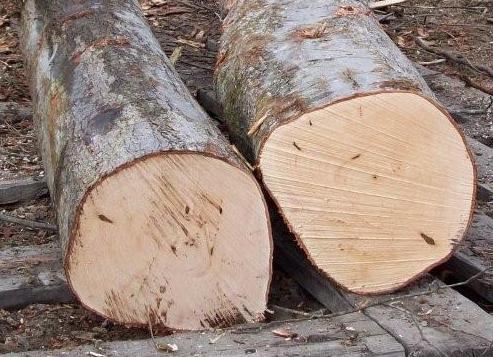 walnut logs for sale walnut logs for sale suppliers and at alibabacom
