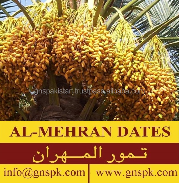 Fresh Healthy Aseel Pakistani Dates Semi And Dried Dates By Gns ...