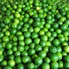 HIGH QUALITY SEEDLESS LIME - $ 420 PER TON