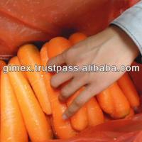 High Quality Fresh Oninon