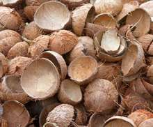 High Quality Coconut Shell / Chips