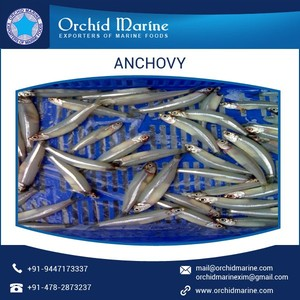 Bulk Distributors of Dried Crispy Anchovy for Dog Food at Low Market Price
