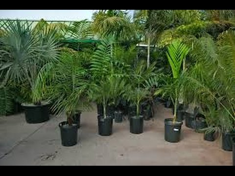 indoor palm trees - indoor palm trees artificial