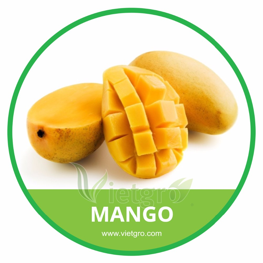 HIGH QUALITY FRESH MANGO /CAT HOA LOC MANGO, View mango fruit, Vietgro ...
