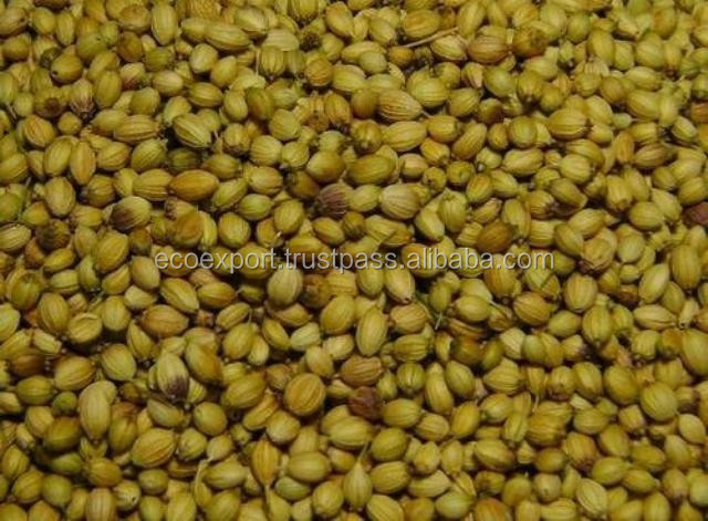 coriander seed trading