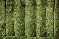 Premium Alfalfa Hay Bermuda Grass/ Klein Grass, Oat Hay, Wheat Hay, Bermuda Straw