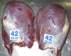 Grade A - Halal FROZEN WHOLE BEEF CARCASSES