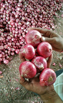Indian Export Quality Fresh Red Onion