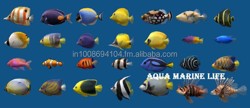 Importati acquario di pesci marini acquari o accessori id for Contenitore per pesci