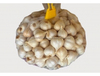 /product-detail/garlic-50020652307.html