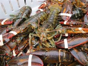Frozen Pink Lobsters , Frozen White Lobsters , Frozen Raw Lobsters , Canadian Lobsters , Live Raw Canadian Lobsters