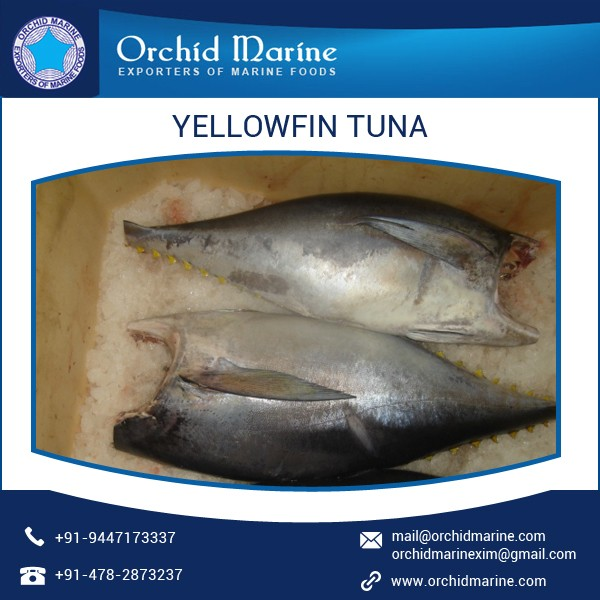 Fresh and Healthy Yellowfin Tuna with High Shelf Life at Attractive Prices
