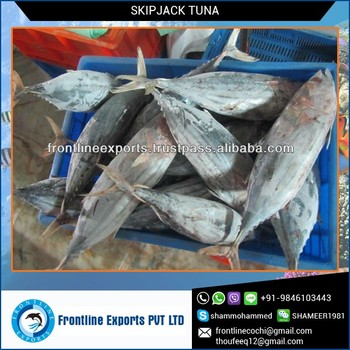Premium Grade and Genuine Tuna Fish Frozen for Low Wholesale Price