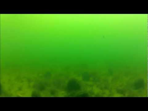 whyalla - burley bucket video footage