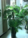 Fancy artificial rubber plant,artificial plant with roots
