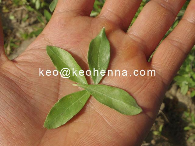Natural Ayurvedic Henna Powder Without Chemical