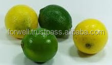 TRUE NEW CROP FRESH CITRUS FRUITS FROM EGYPT