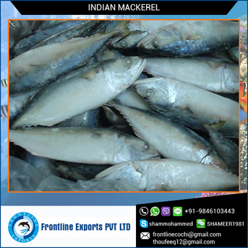 Fresh Frozen Seafood Mackerel Tin Fish
