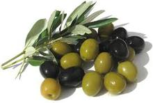 New crop fresh green & black olive for sale ,black olives pitted Hot sale
