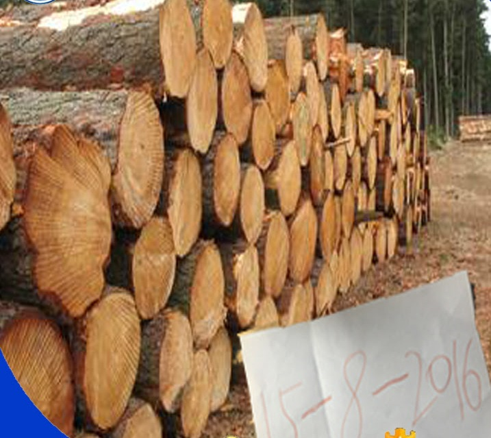Doussie Logs Suppliers/Doussie Square Logs/Doussie wood/Pine Wood Logs