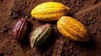 New Harvest COCOA Powder/raw natural cocoa/Organic Natural Cocoa Powder