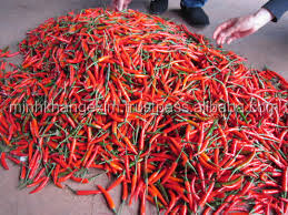 Fresh Chilli - Cheap Price