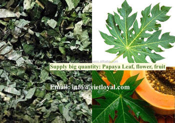 papaya fruit is dry fruit healthy