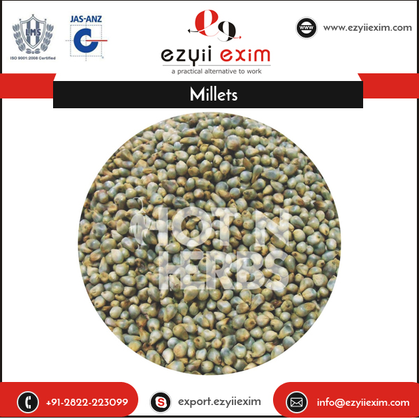 Indian Origin Rich Quality Fresh Green Millets