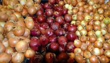 Fresh yellow onion | red onion for sale