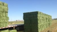 Alfalfa Hay Pellet Oat Hay Pellets, Barley Hay Pellets