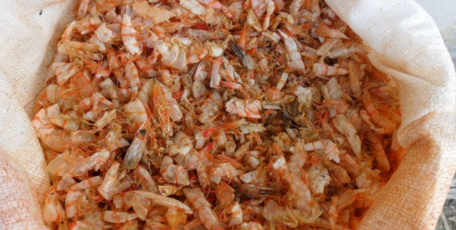VietNam shrimp head shell powder competitive price and good quality for feed meal