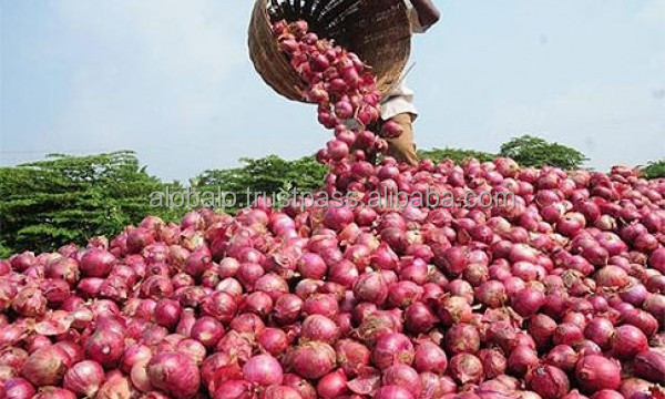 Fresh big onion from West Africa
