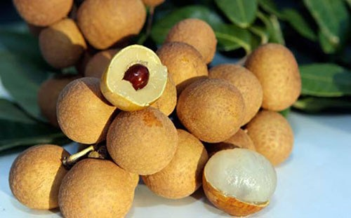 FRESH LONGAN FRUIT - DRIED LONGAN - TOP QUALITY - BEST PRICE