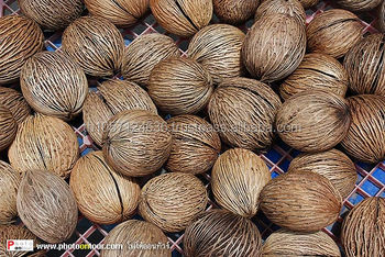 buy cerbera odollam seeds