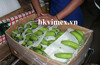 HIGHT QUALITY FOR IMPORT/ FRESH BANANAS