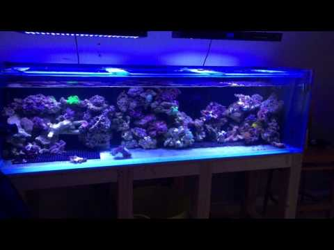 Marine aquarium LED lighting from UK Marine Lighting