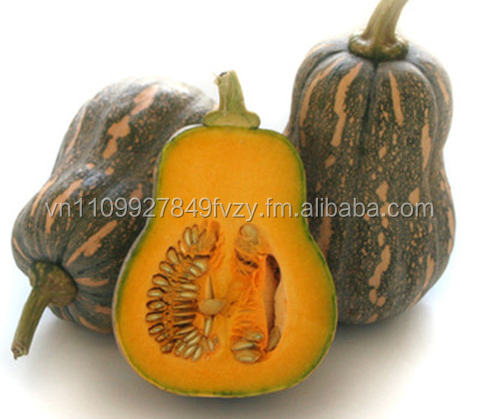 FROZEN IQF PUMPKIN : DICED, CHUNK, PUREE, STEAMED FROM VIETNAM