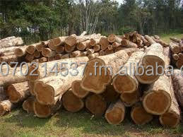 Teak Wood Logs Natural Teak Wood Ecuador Teak Buy Teak Wood For Sale Teak Wood Buying Old Teak Wood Product On Alibaba Com