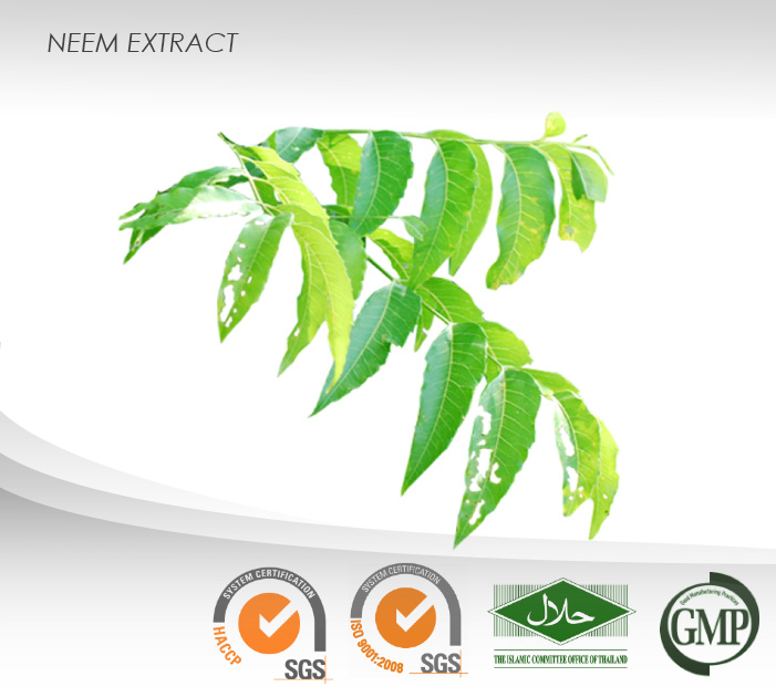 Neem Liquid Extract : 1 mg% Azadirachtin : Cosmetic Ingredient, nail polishes, shampoos, toothpastes, soap
