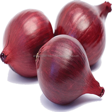 Fresh Red Onion For Sale
