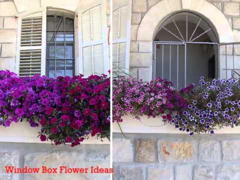 Cheap Flower Window Box Ideas, find Flower Window Box Ideas deals ...